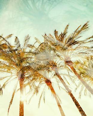 palmtrees1_1000.jpg