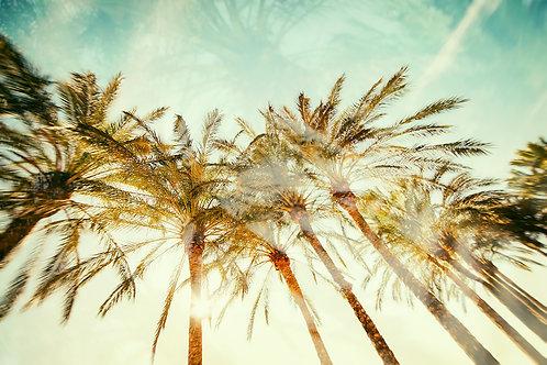 PalmAtrees