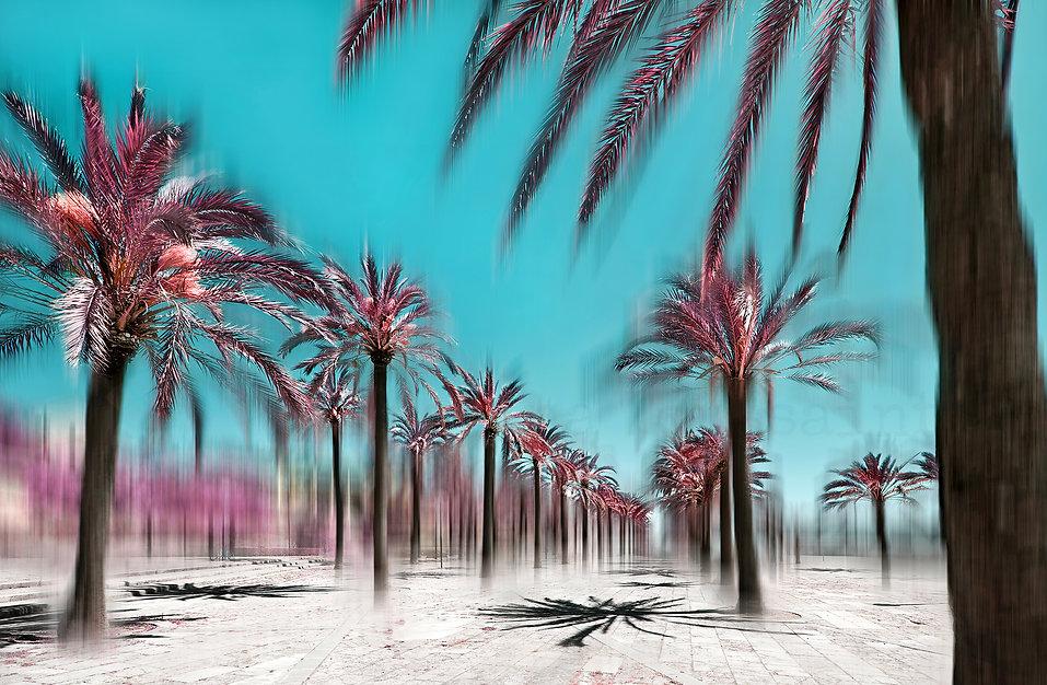PalmaInfraredCitytrees-2000Logo.jpg