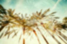 palmtrees-2000Logo.jpg
