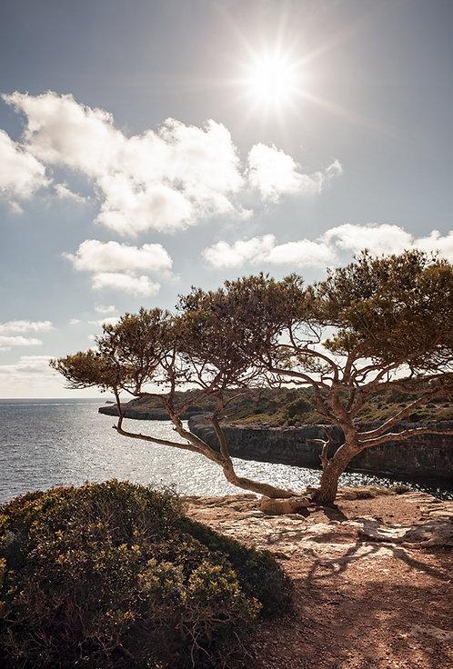 Cala Pi Tree