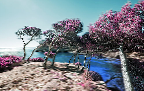 Pink Trees by the Sea