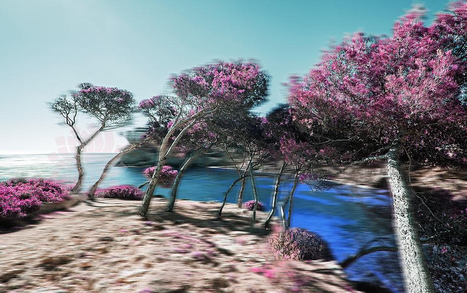 MallorcaInfraredPinkTrees-2000Logo.jpg