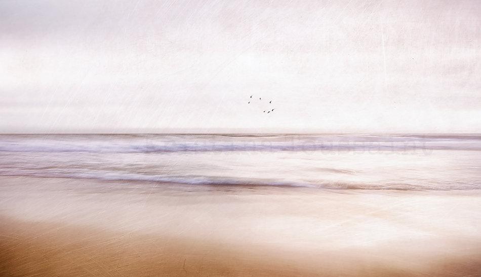 Flyingseagulls-2000Logo.jpg
