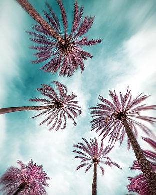 MallorcaInfraredPalmtrees-1000.jpg