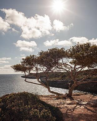 calapitree-1000.jpg