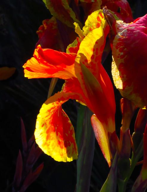 An Iris Sunset_small.jpg