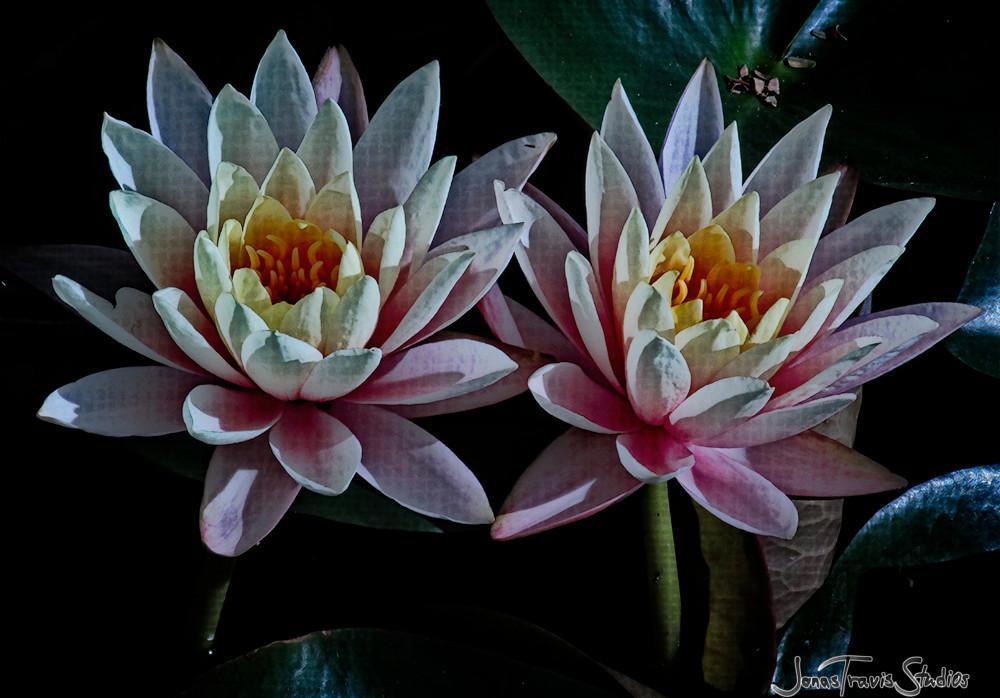 Echo Park Lotus #7