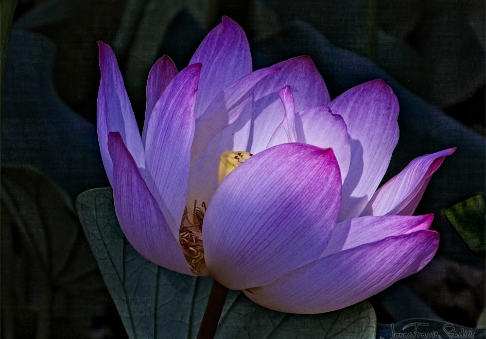 Echo Park Lotus #3