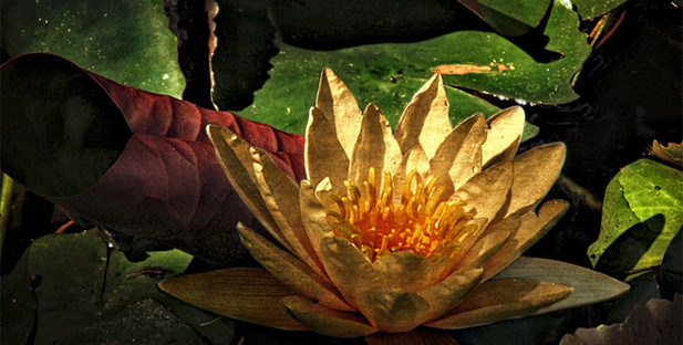 Lotus at 9AM