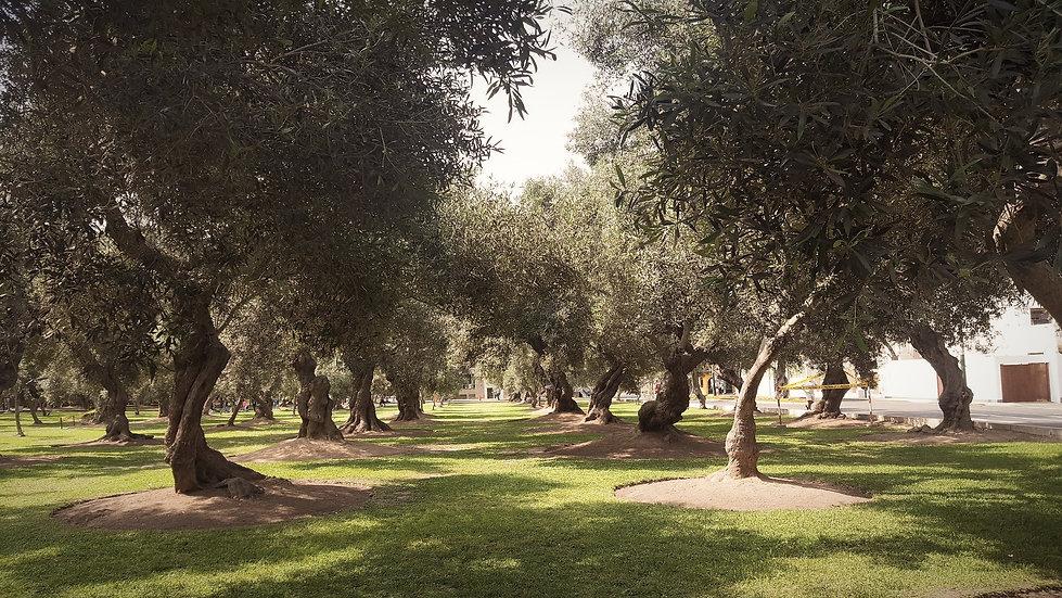 cropped-lima-el-olivar-parque-flickr_edi