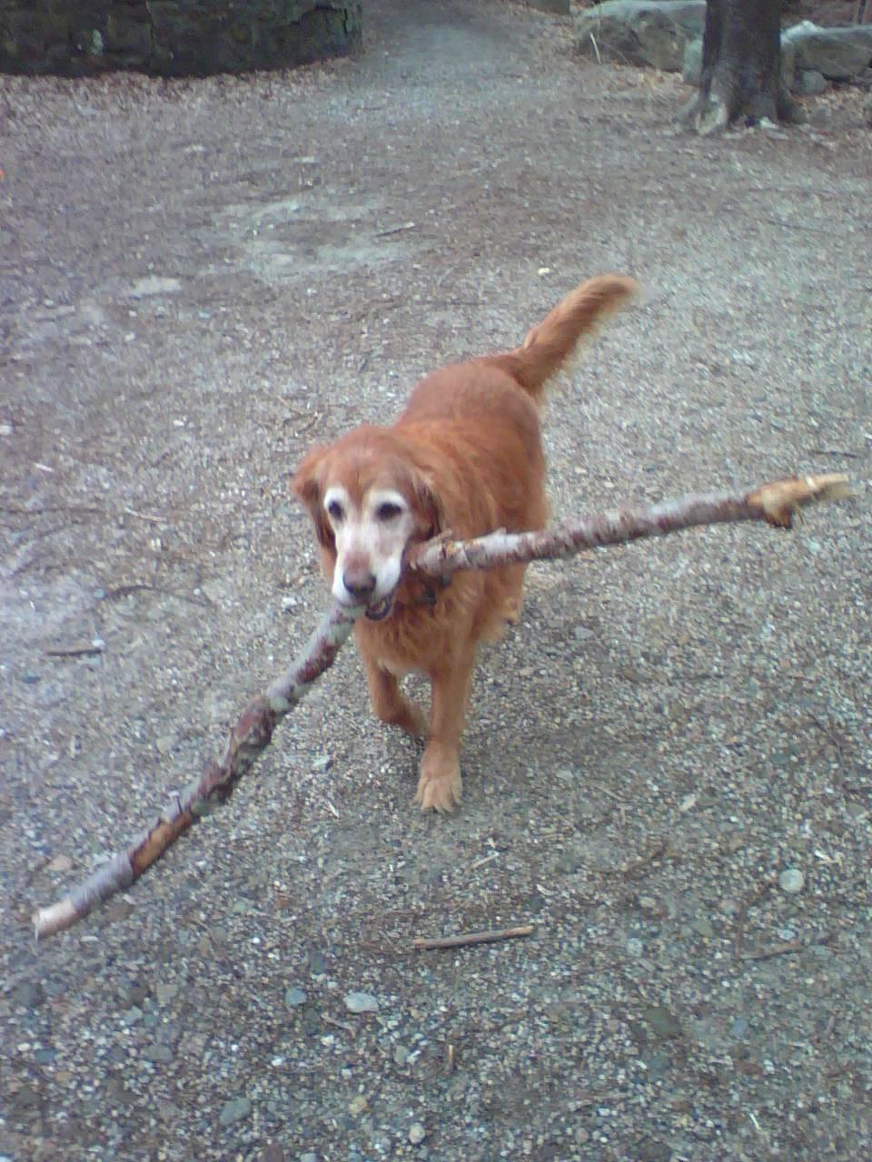 Lady & her Stick