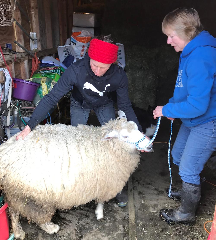 Wind Ridge Farm - Spa Day for Ewe