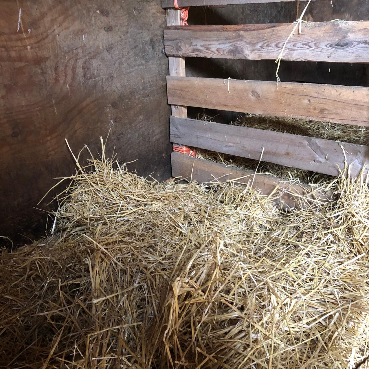 Wind Ridge Farm Lambing Stall 3