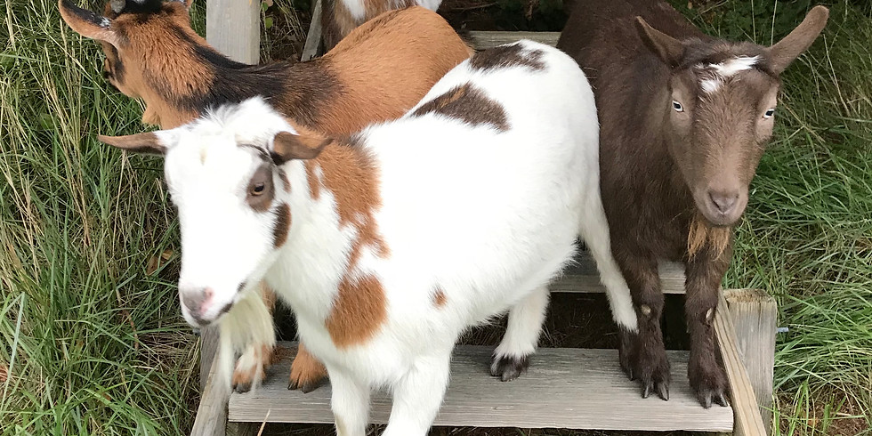Walk with Get my Goats February 3