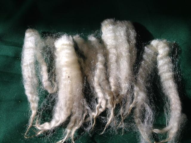 More Fine Wool Samples