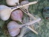 PTCF_Garlics.jpg