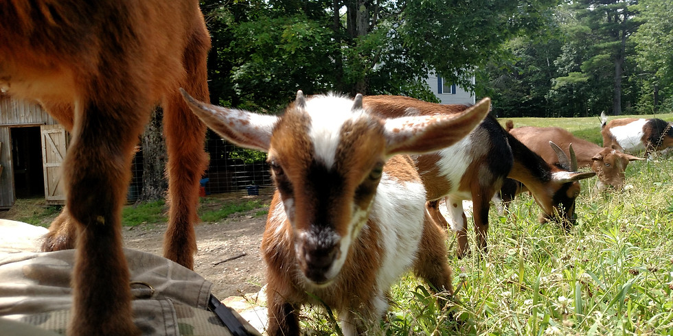 Walk with Get my Goats June 20