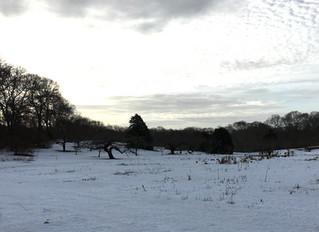 Winter at Peachtree Circle Farm