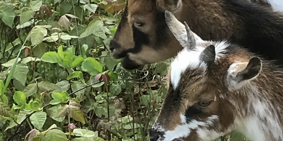 Walk with Get my Goats March 3