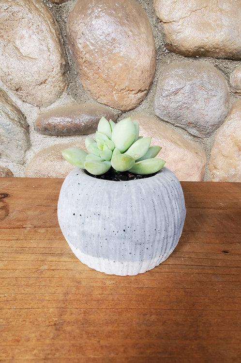 Circle Cement Pot