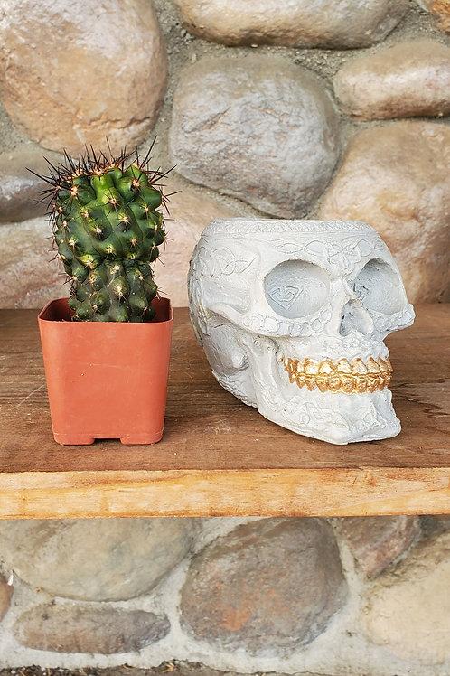 Raw Cement Decorative Skull