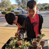 Kids love Succulents