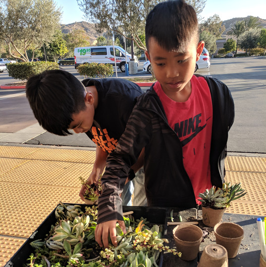 Kids love Succulents