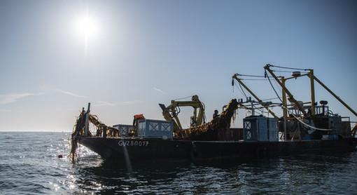 algolesko-barje-recolte-algues