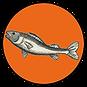 11A_fisk_kopi.png