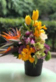Saksı Aranjmanı, Saksı Çiçeği