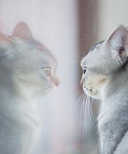 Katze Spiegel.jpg