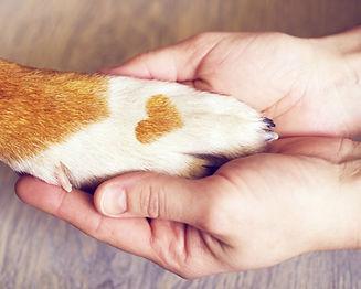 Hund Herz Hand.jpg