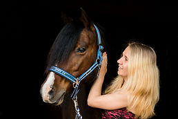 horse-3389350_1920.jpg