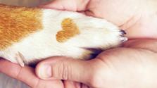 Telepathie – der perfekte Weg um mit Tieren 1:1 zu kommunizieren