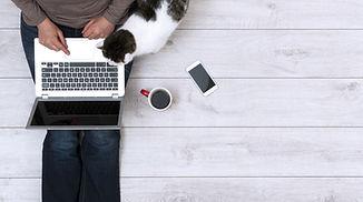 Frau Laptop Katze.jpg