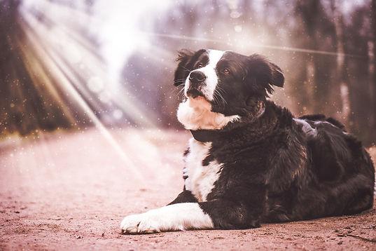 dog-2201996_1280.jpg