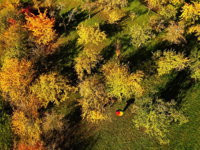 Bunter Regenschirm im Herbstwald ganz obe