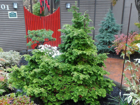 Evergreens: The Perfect Plant