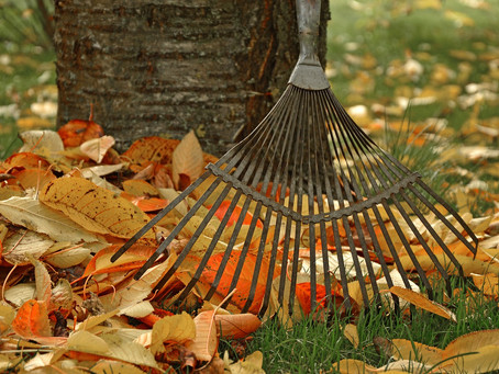 Tree Planting This Fall? 5 Tips For Healthy Trees
