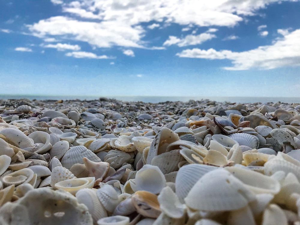 Shells all over at blind pass beach during low tide in Sanibel Island