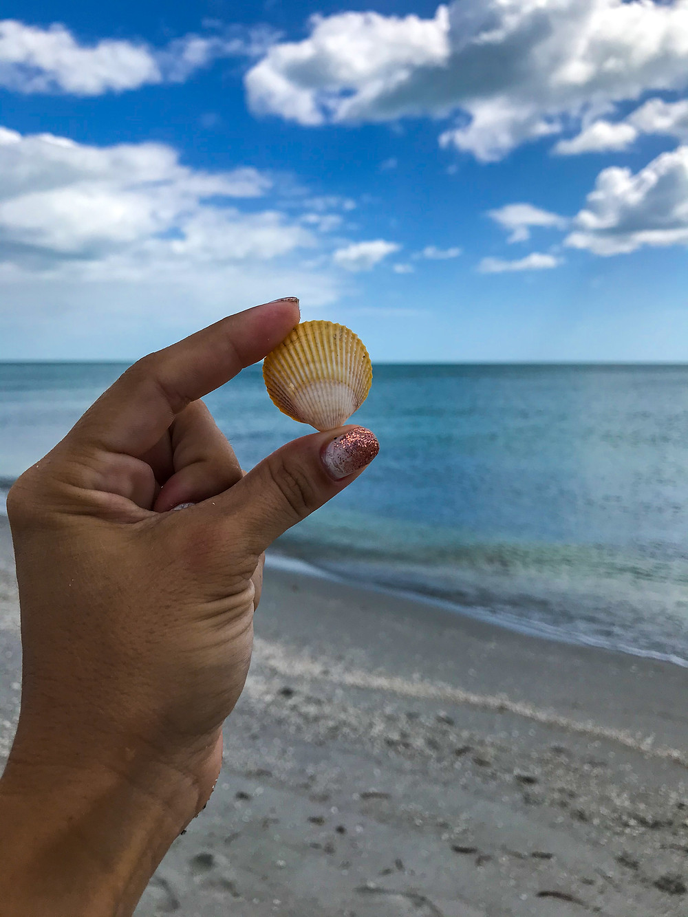 Small shell found during low tide in Sanibel Island