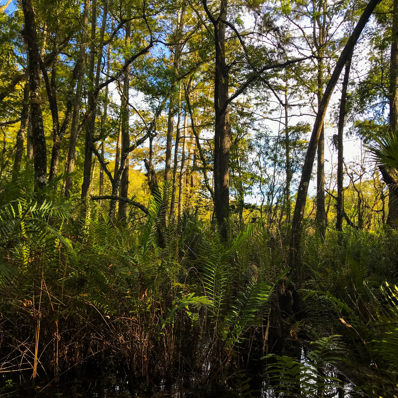Six Mile Cypress Slough Preserve