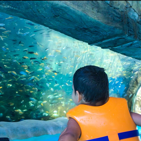 Everything you must know before visiting Aquatica Orlando