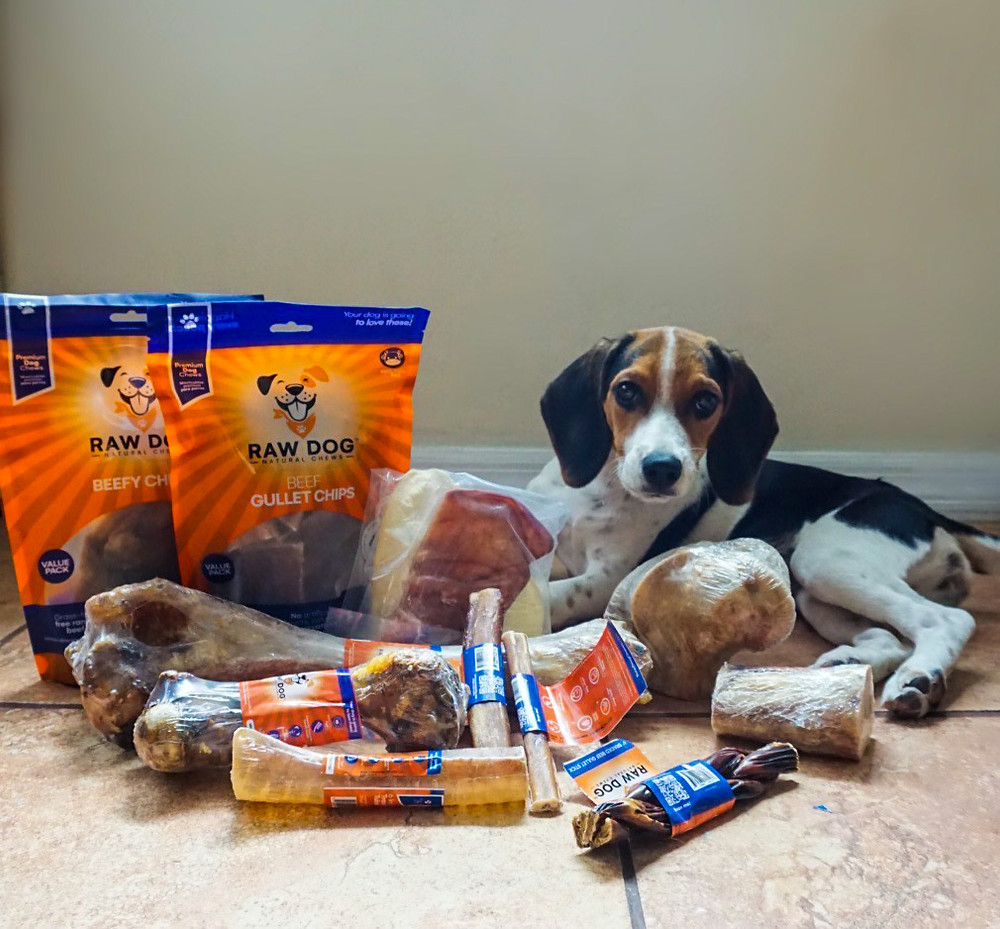 Beagle laying down with all her safe treats and chews from Raw Dog Natural chews