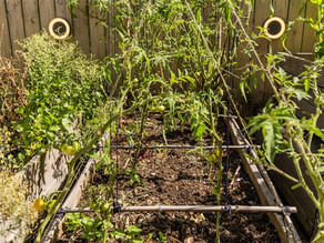 How you can start an edible garden with no money