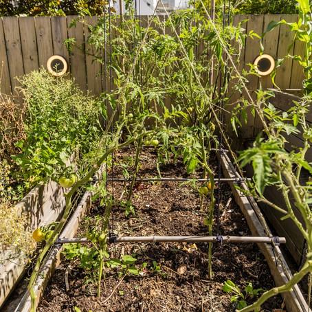 How you can start an edible garden with no money