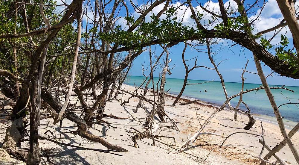 beach erosion in Sanibel Island, Florida