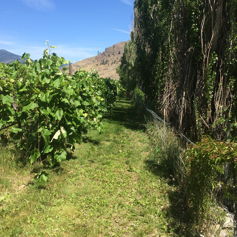 Beautiful day in the Similkameen