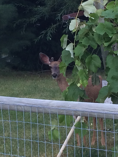 A Visitor to the vineyard